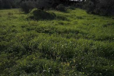 Land Sale - Glyka Nera, Athens- Eastern Suburbs